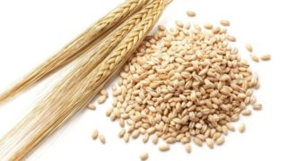10 Best Benefits of Barley