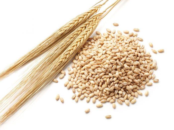 Barley11