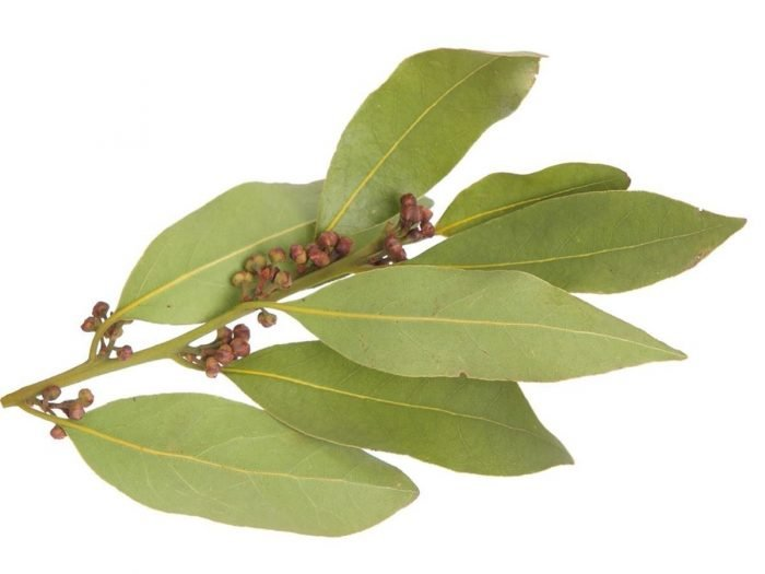 Image result for Bay Leaf