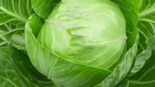 How to Cut Cabbage?