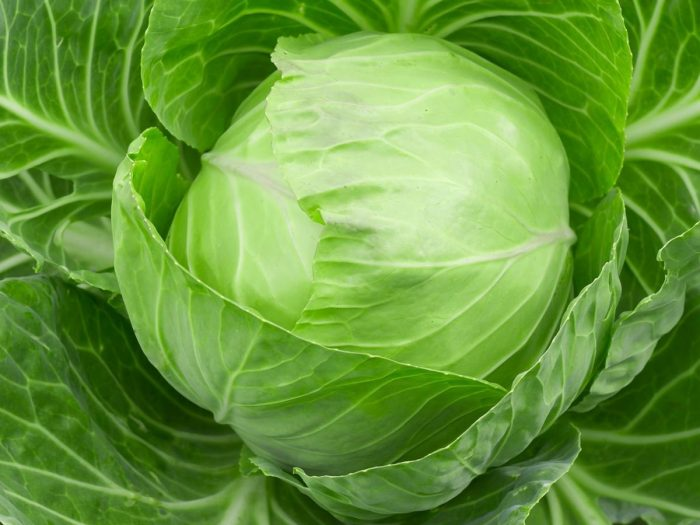 Cabbage11