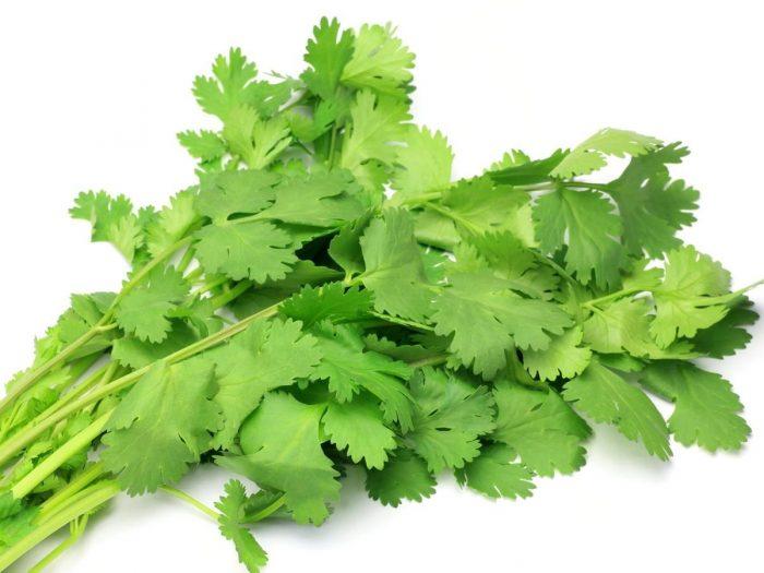 16 amazing benefits of cilantro or coriander organic facts