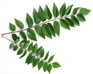 Curryleaves-300x238