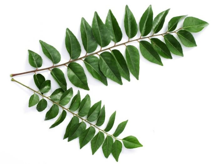top 11 benefits of curry leaves organic facts