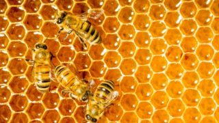 Organic Honey Standards