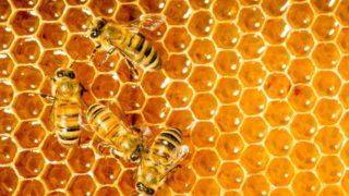 Organic Honey Standards