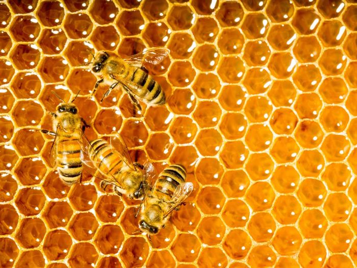 Pildiotsingu honey tulemus