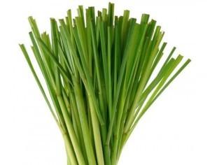 Lemongrass-300x236