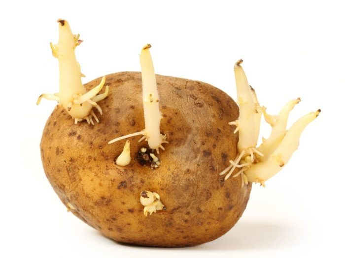 Potato Sprouts: Are They Good?