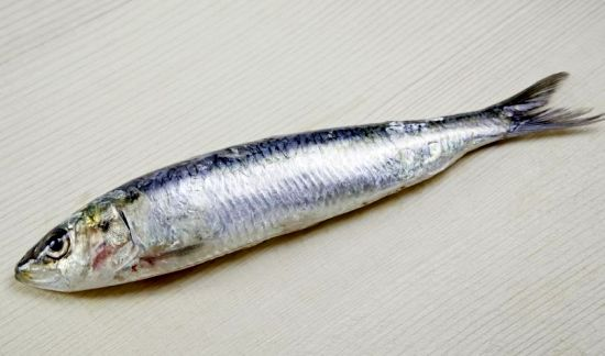 Health Benefits of Sardines