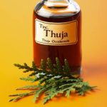 Health Benefits of Thuja Essential Oil