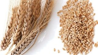 11 Incredible Wheat Benefits