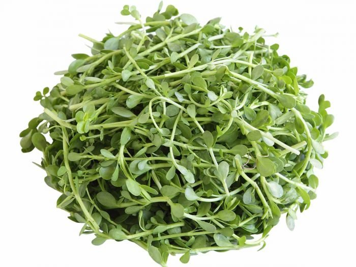 Health Benefits of Brahmi