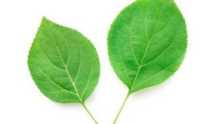 21 Surprising Chlorophyll Benefits