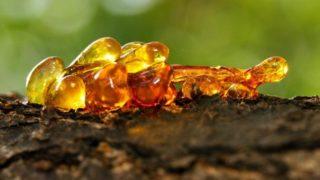 5 Amazing Benefits of Elemi Essential Oil