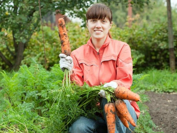 Benefits of Organic Farming for Small Farmers