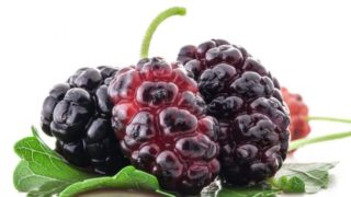 8 Best Benefits of Mulberries