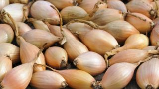 3 Best Substitutes for Shallots