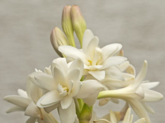 5 Best Benefits of Tuberose Essential Oil