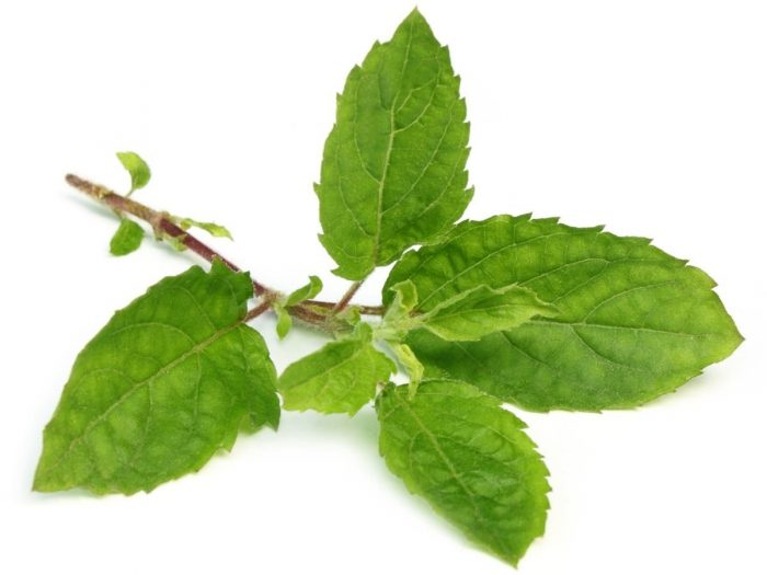 Image result for uses of tulsi
