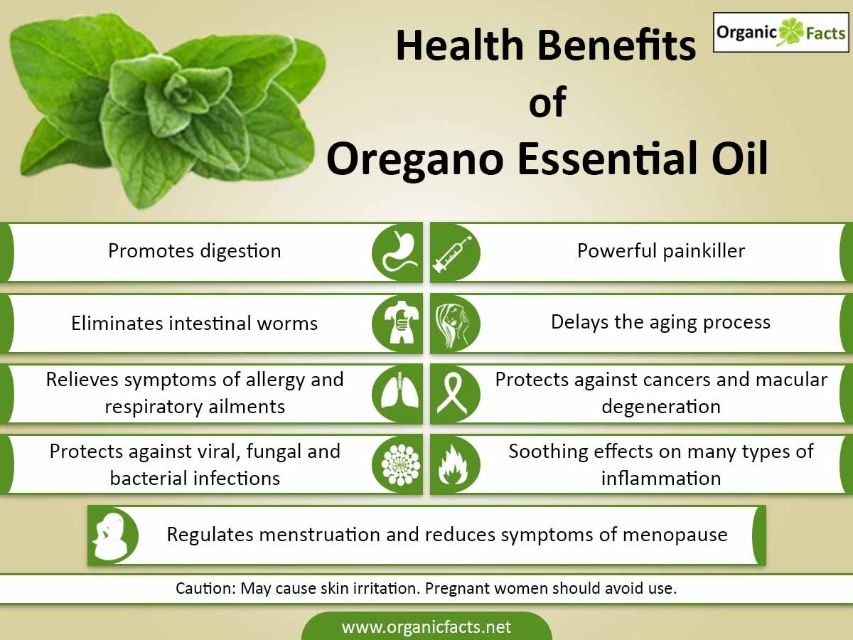 Oil Of Oregano To Treat Ear Infections In Dogs