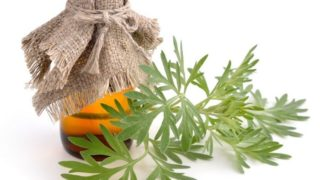 10 Incredible Benefits of Wormwood Essential Oil