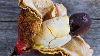 7 Wonderful Benefits of Ackee Fruit