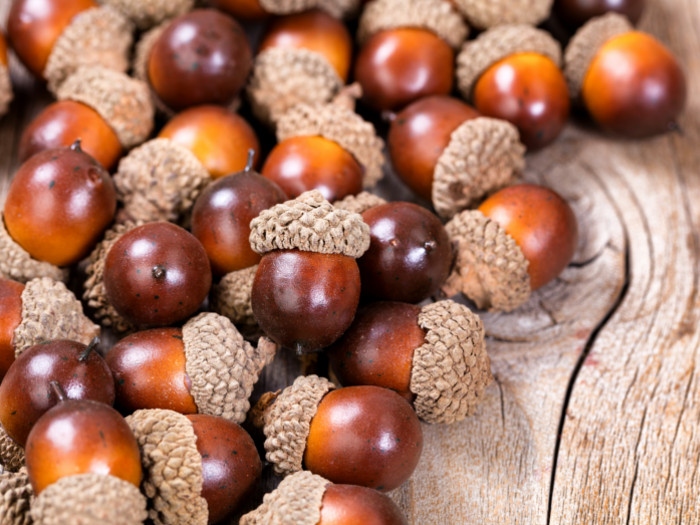 Acorns piled up against each other on a wooden counter