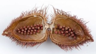 9 Incredible Benefits of Annatto