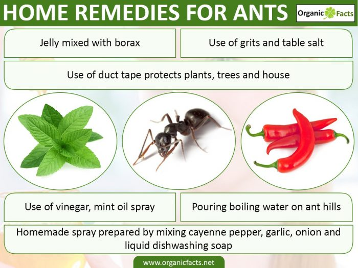 Home Remedies For Ants Organic Facts