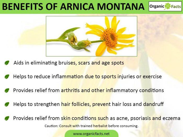 8 Surprising Benefits Of Arnica Montana Organic Facts