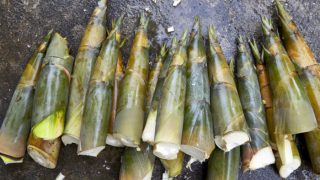 13 Interesting Bamboo Shoots Benefits