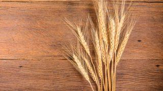10 Best Benefits of Barley