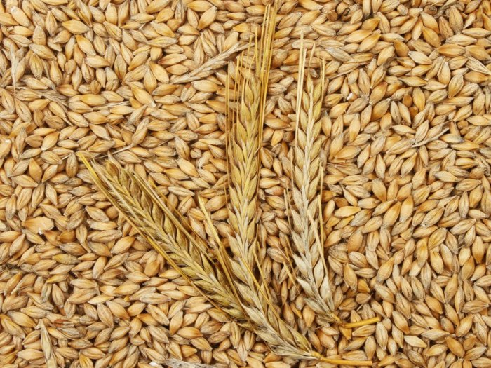 10 Best Benefits Of Barley Organic Facts