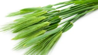 9 Surprising Benefits of Barley Grass