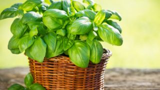 Top 4 Substitutes For Basil