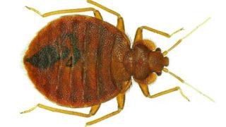 10 Essential Oils for Bug Bites & Stings