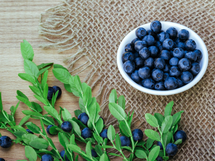 8 surprising benefits of bilberry organic facts