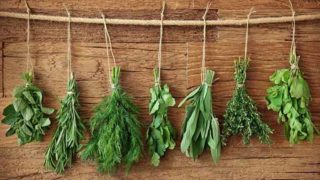 Top 16 Herbs For Health & Healing