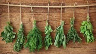 Top 16 Herbs For Health & Healing