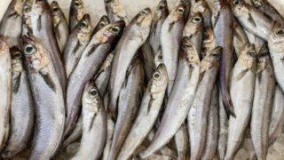 9 Amazing Health Benefits of Whiting Fish