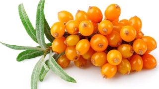 Health Benefits of Buckthorn Berry