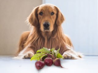Can Dogs Eat Sesame Seeds Organic Facts