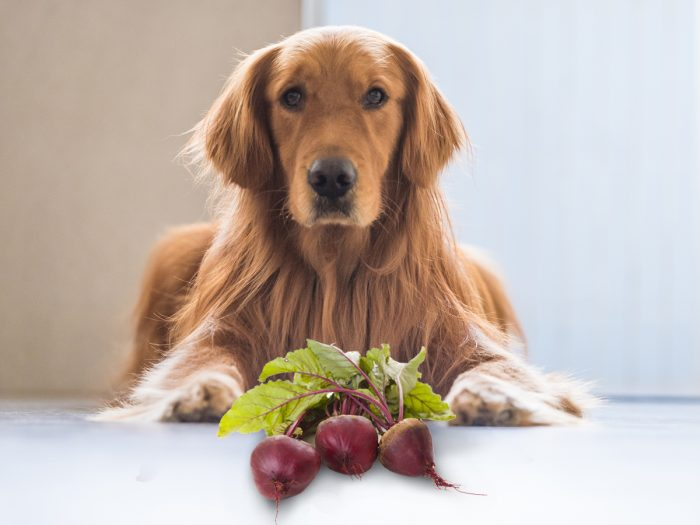 Can Dogs Eat Beets Organic Facts