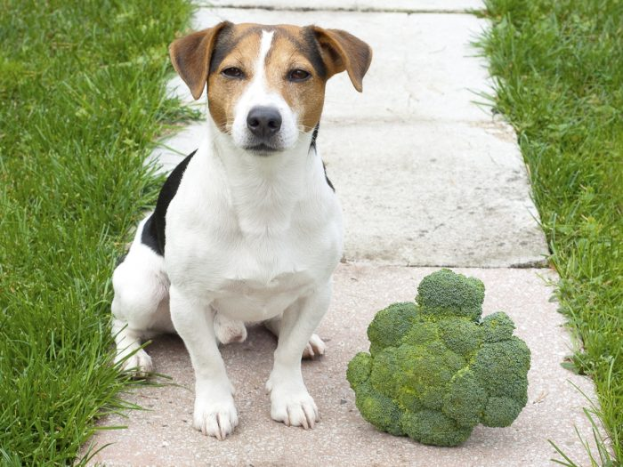 Can Dogs Eat Raw Broccoli Stalks