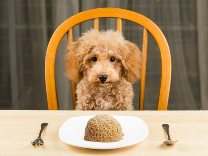 Can Dogs Eat Rice Organic Facts