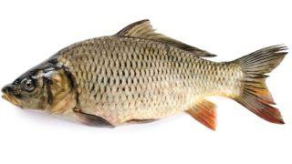 11 Amazing Benefits of Carp