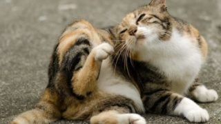 10 Effective Home Remedies for Cat Fleas