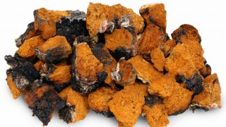 Top 7 Benefits of Chaga Mushrooms