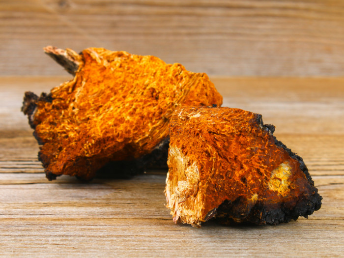 Chaga mushrooms on a wooden floor